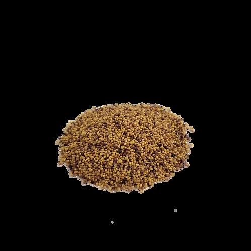 Graines de trèfle rouge à germer bio