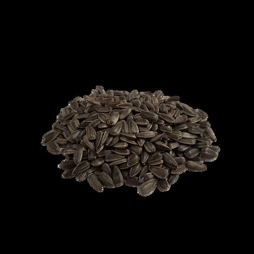 Graines de tournesol à germer bio