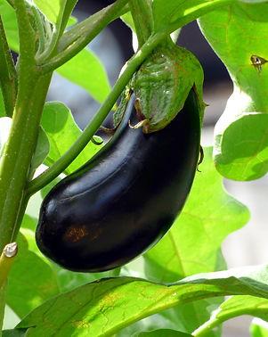 vegetable-2584412_1920.jpg