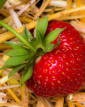 strawberry-1459564_1920.jpg