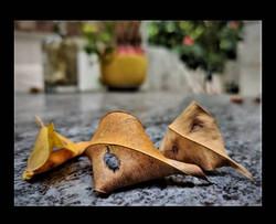 Fallen....Yet New - Navroze Dhondy