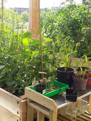 Educatieve tuincreaties op het balkon en op het dak