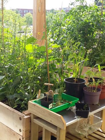 Balcony & Rooftop Educative Garden Creations