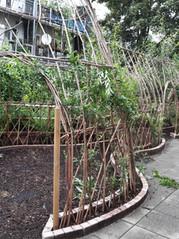 Regen- en droogte-bestendige en schooltuinen