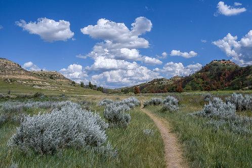 Sagebrush Path