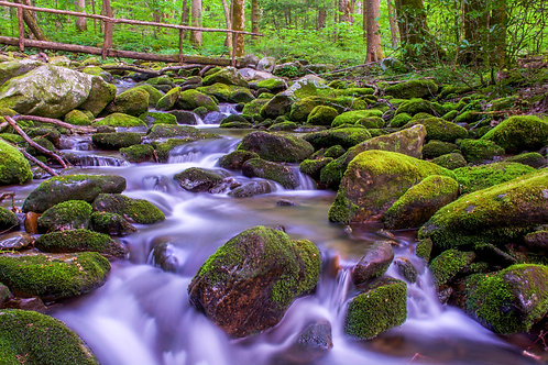 Forest Serenity