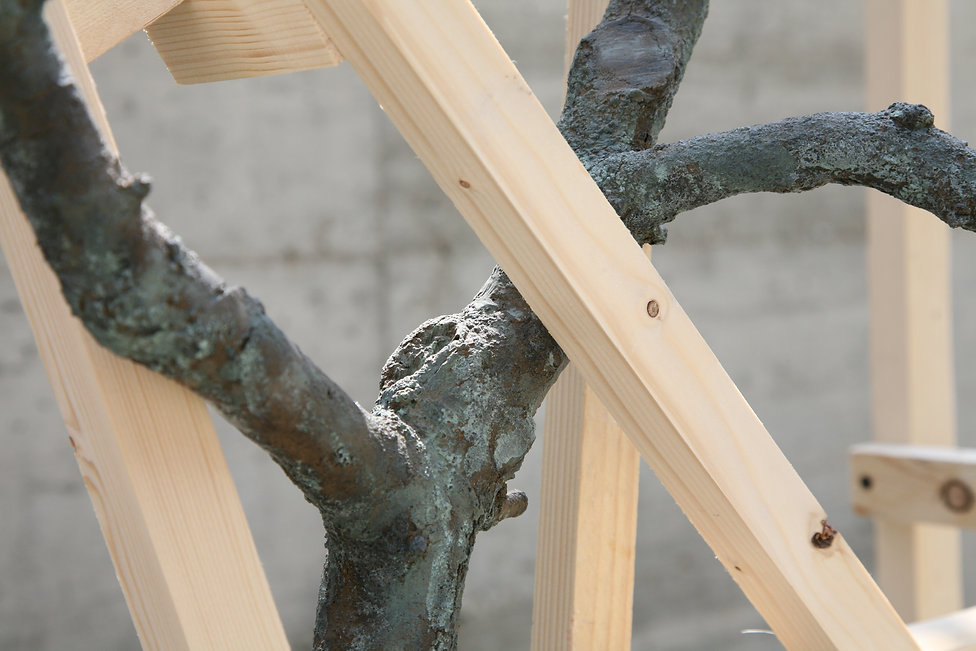 Daniele Accossato, Sculpture, contemporary art, branch, bronze