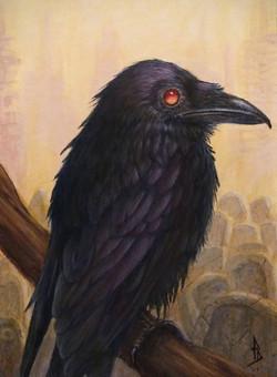 Raven Watcher