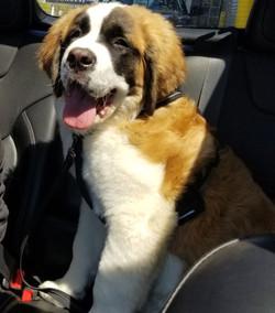 Daisy's Car Ride