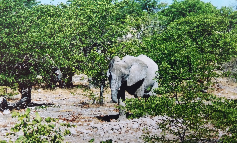 Namibia diary - Day 14 - Etosha National
