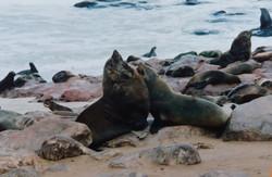 Namibia diary - Day 12 - Seals
