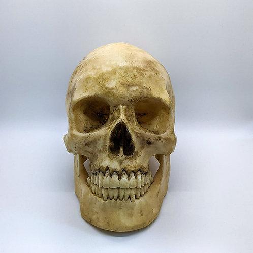 Decorative CATACOMB Skull - with jaw