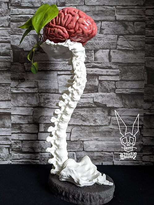 1/2 size Brain and Spine Set - White