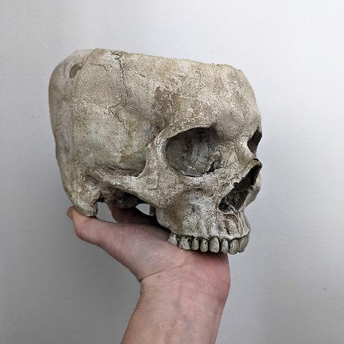 Skull Planter - Lifesize - ENTOMBED