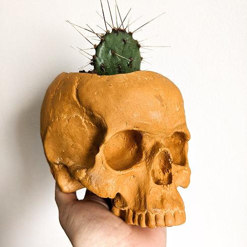 Skull Planter - 1/2 size