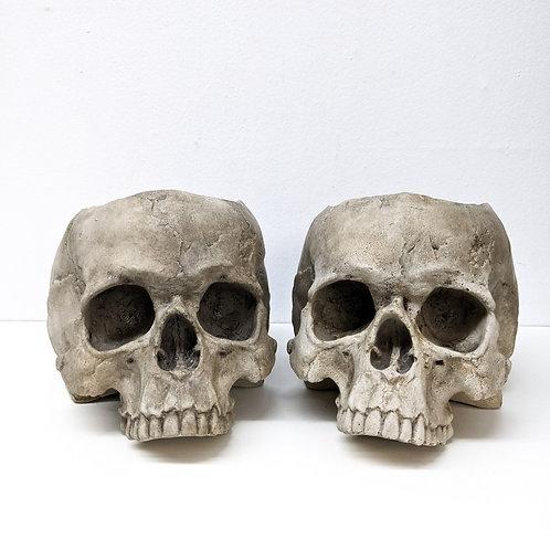 Skull Planter - 1/2 size - ENTOMBED