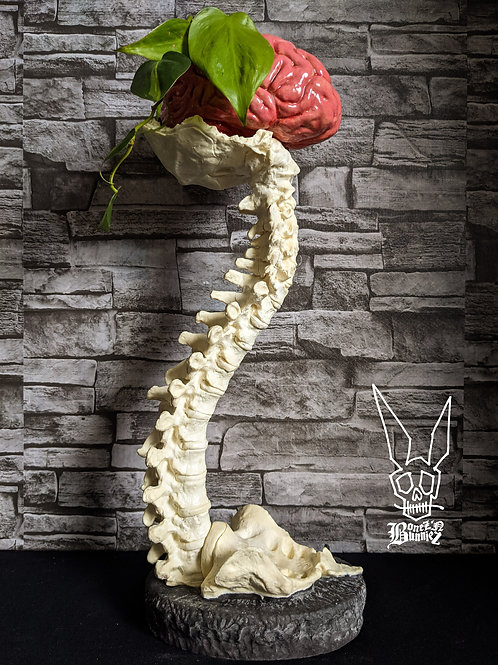 1/2 size Brain and Spine Set - Off-White