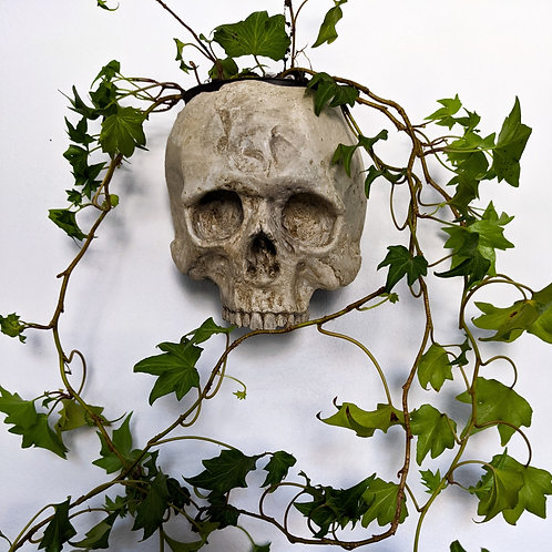 Skull Planter - Wall Cachepot - ENTOMBED