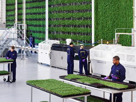 Employment Opportunities With PLENTY VERTICAL FARMS Inc., Virtual Events