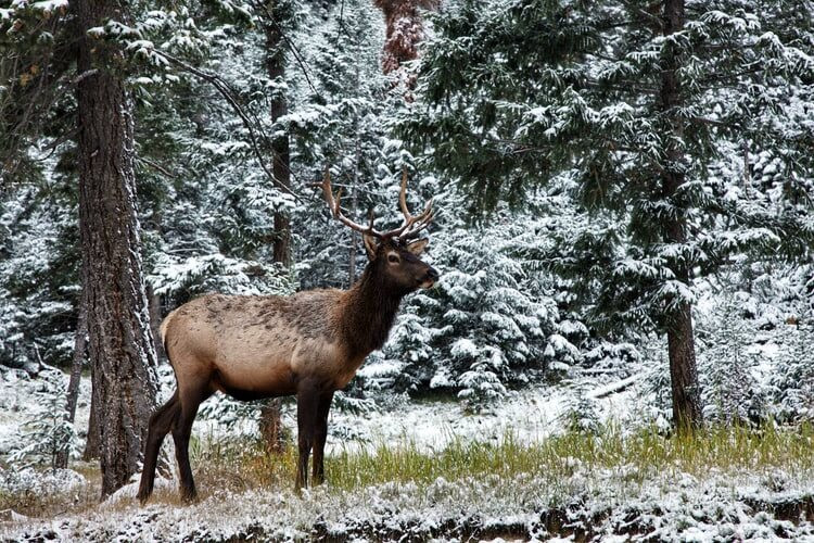 5 things to do in Canada - canadian wildlife and natural lanscape