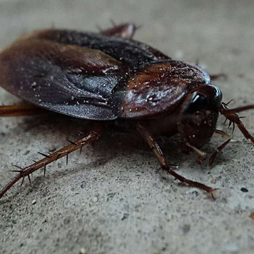 The Bug Experts Share Their Tips on How to Get Rid Of Cockroaches For Good