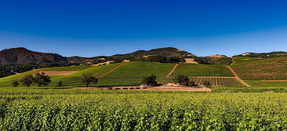 https://pixabay.com/photos/vineyards-napa-valley-california-1590014/