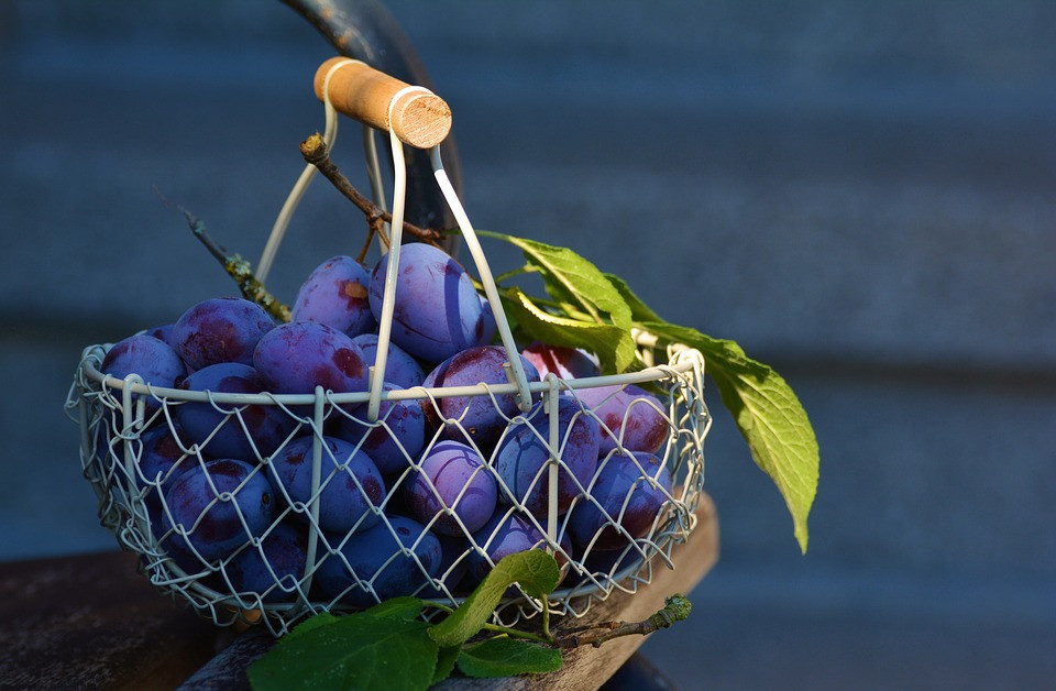 Are organic foods more nutritious - a basket with blueberries and few green leafs