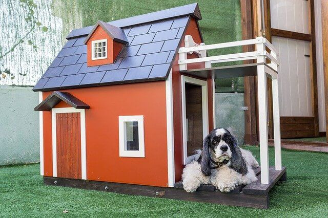 pet house with windows and doors, raised floor with orange walls