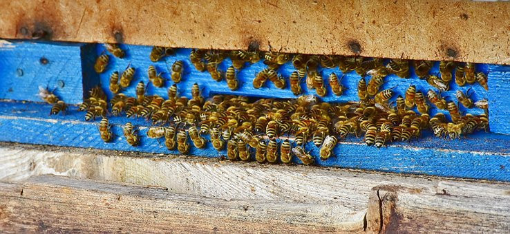 bees nest with blue entry