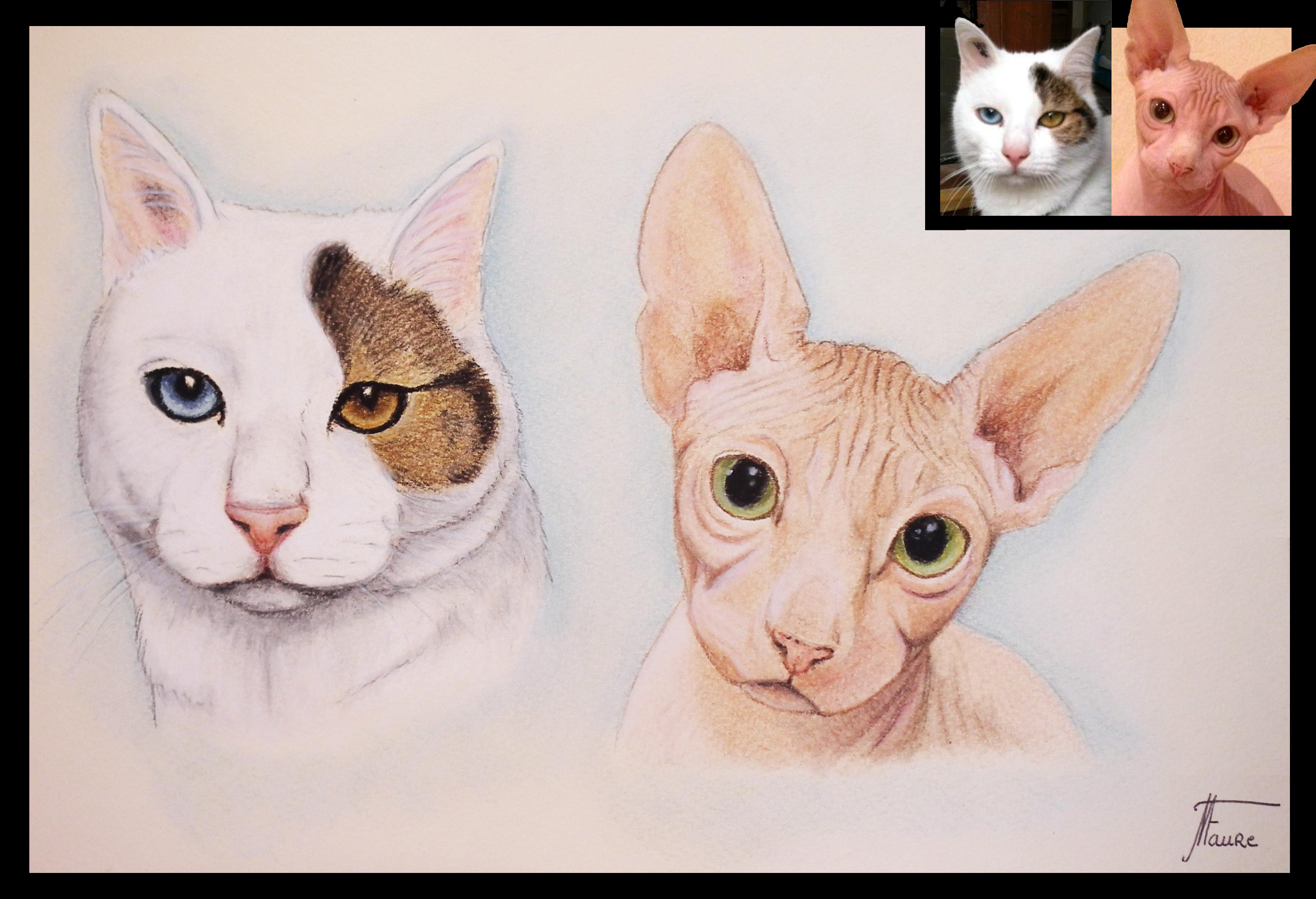Portrait chats pastels