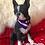Thumbnail: Collier bandana pour chien France 2018
