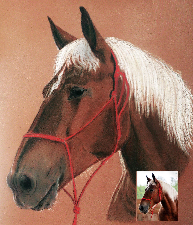 Portrait cheval pastels