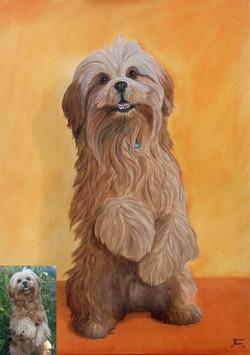 Portrait lhassa peinture à l'huile