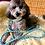 Thumbnail: Laisse pour chien - modèle Lagune