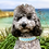 Thumbnail: Collier pour chien - modèle Lagune
