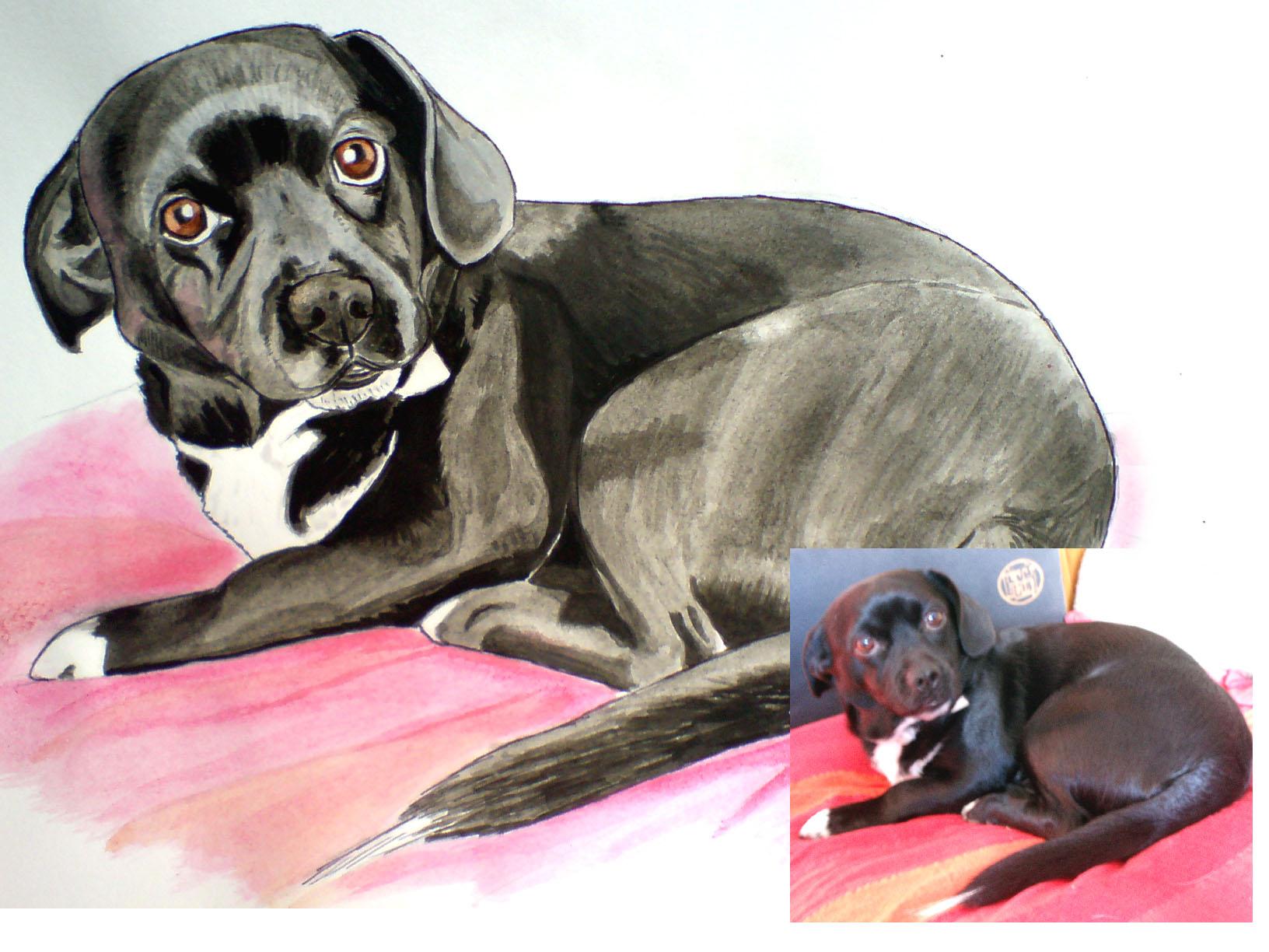 Portrait petit chien aquarelle