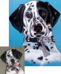 Portrait dalmatien pastels