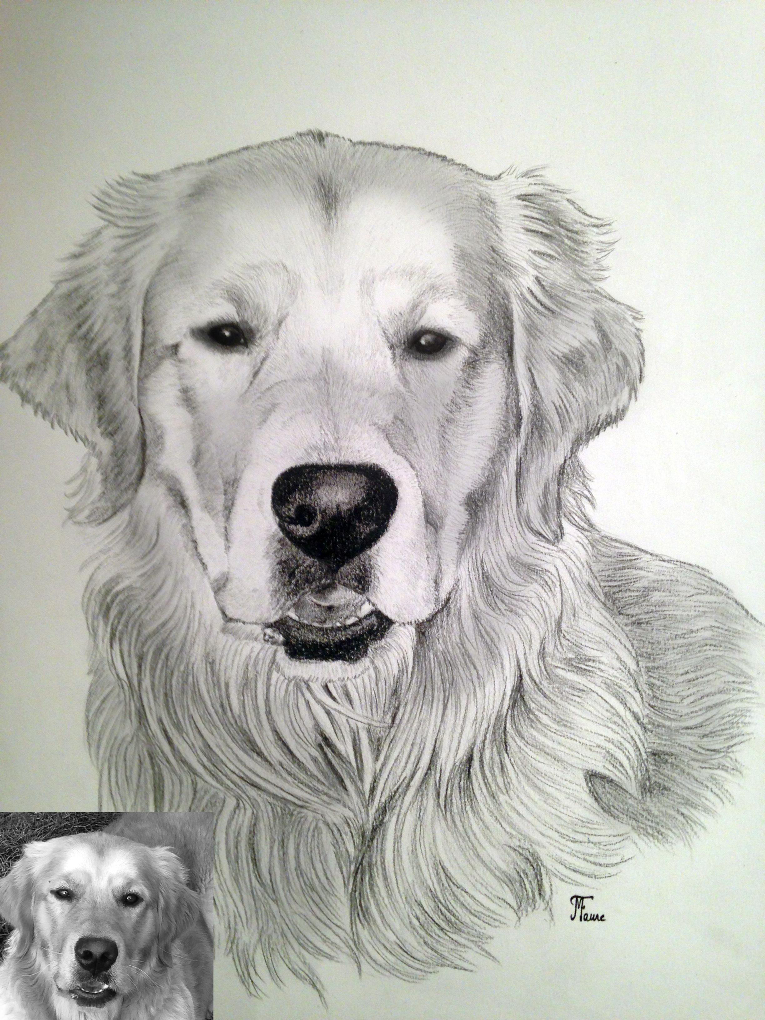 Portrait golden crayon noir
