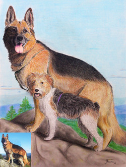 Portrait berger allemand/fox pastels
