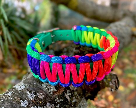 Collier pour chien - modèle Rainbow