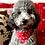 Thumbnail: Collier bandana pour chien - modèle Étoilé