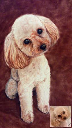 Portrait caniche pastels