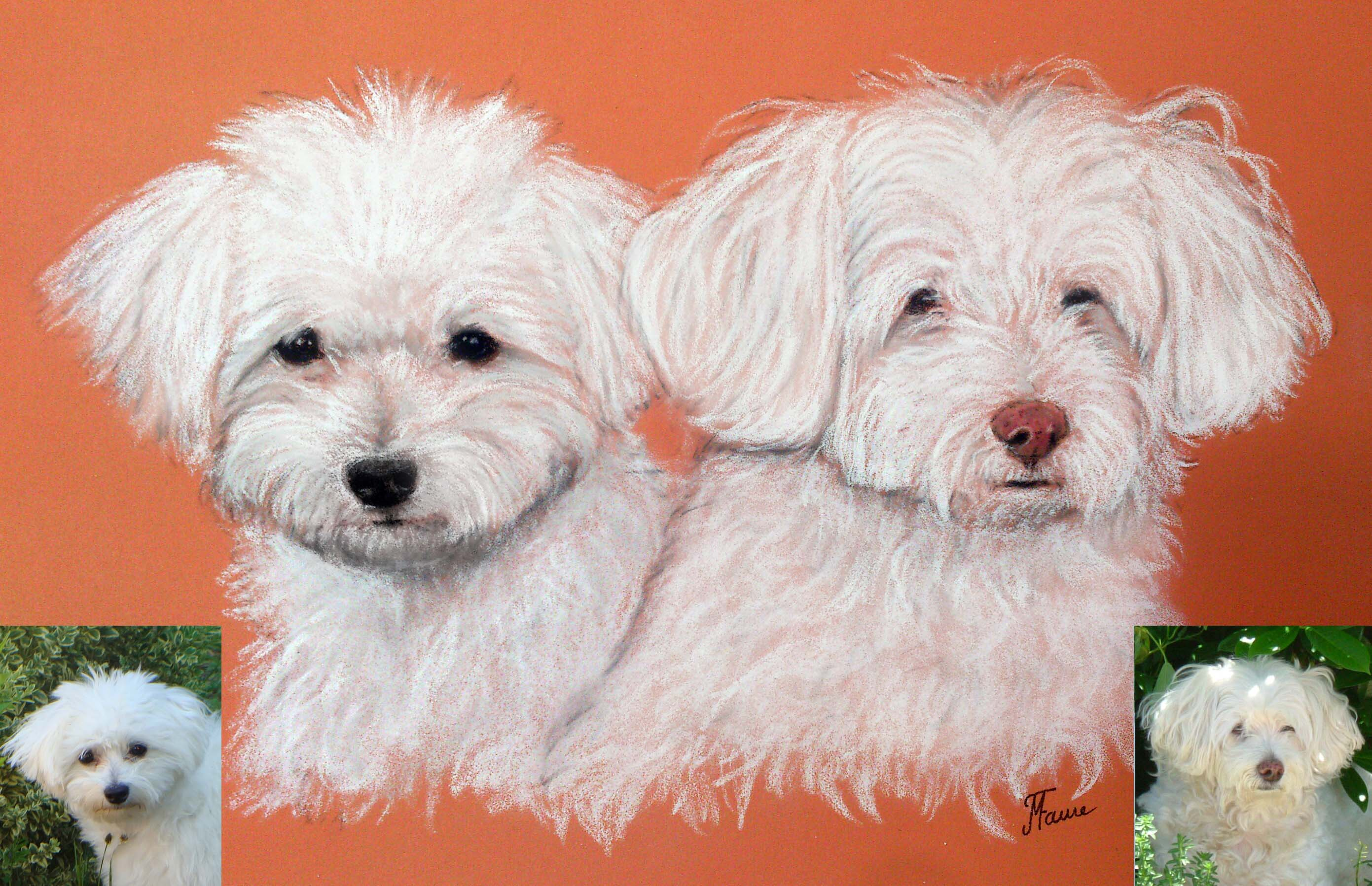 Portrait bichons pastels