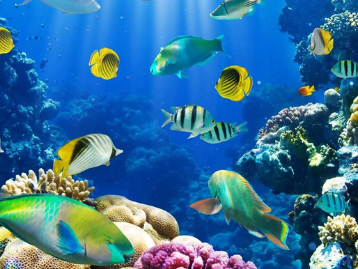 Transparency and Innovation will Help Build Ocean Resilience