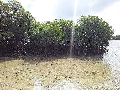 Tonga works on clean, resilient and sustainable environment