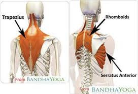 Treating Dysfunction of the Shoulder