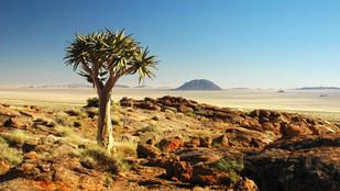 Bush Babies in deep Kalahari-