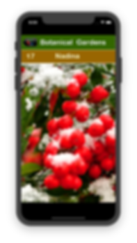 iPhone screenshot of Botanical Garden stop #17 Nadina Winter with red berries and snow
