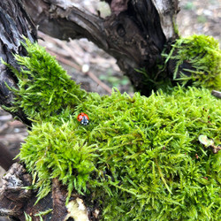 2021-01 Ladybug