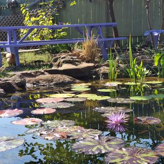 Koi Pond - Purple Martin Pond